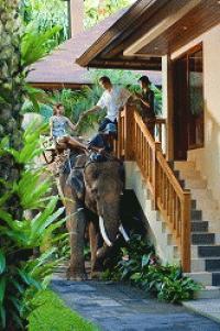 ☆いざ!象の楽園に泊まる!?☆エレファントサファリパークロッジへ