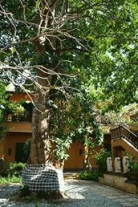 ☆恋愛成就の不思議な木・アヤナ リゾート&スパ バリを取材撮影その1☆AYANA Resort and Spa Bali