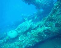 ★バリ島の沈船ポイントでファンダイビング!トゥランベン1本目★