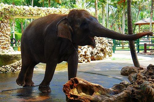 象に乗れて最高☆